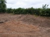 gravelpitfield130710-06