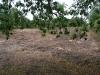 gravelpitfield130710-02